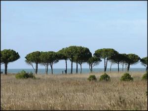 Divjaka, harmonizimi i diellit, rërës, detit dhe pyllit