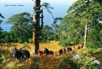 Në Llogora – aty ku mali përqafon detin